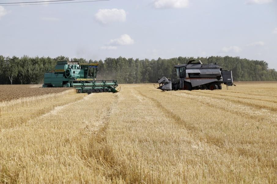 Вагонов, чтобы вывезти 320 тысяч тонн урожая из Зауралья, не хватает