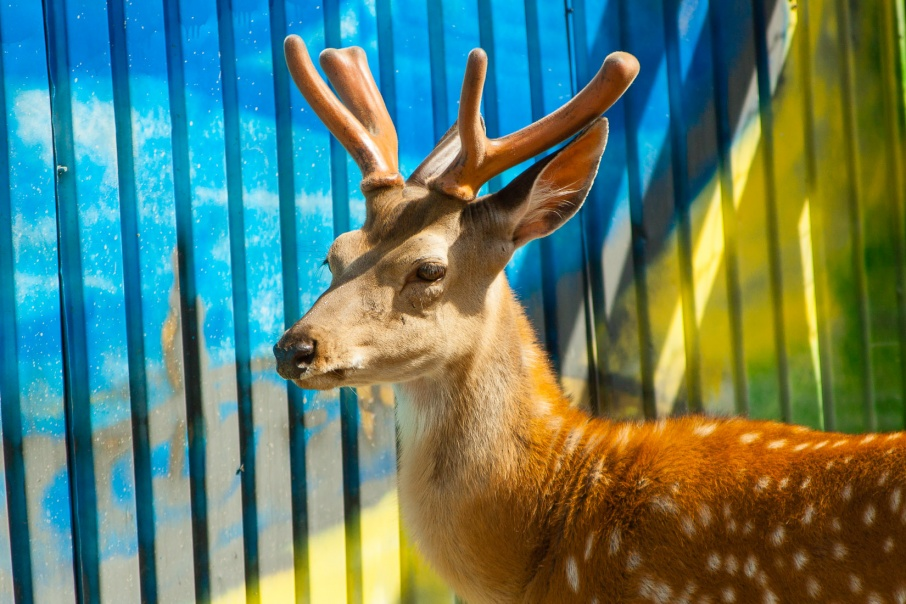 От 100 рублей до 400 тысяч: 12 февраля выросли штрафы за браконьерство