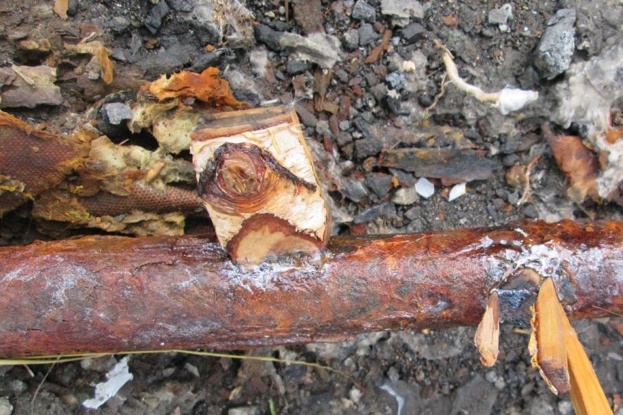 Куртамыш остался без воды из-за малоснежной зимы и старых труб