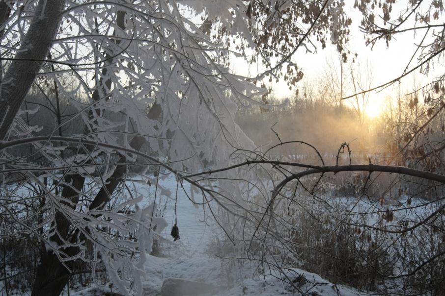 Лесничий в Шатровском районе за взятку отдал под вырубку лучшие деревья