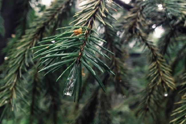Зауралец незаконно вырубил деревьев на 400 тысяч рублей
