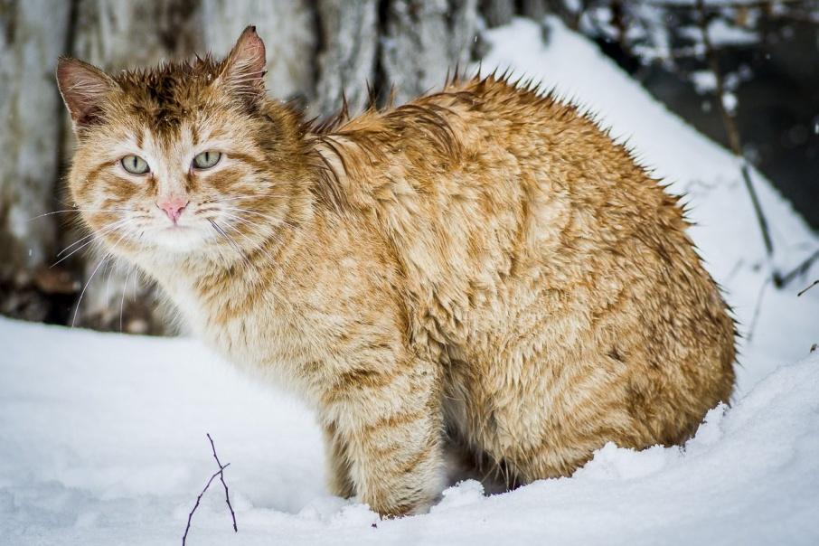 Утро после снегопада: как Курган пережил запоздалую зиму в марте