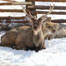 Главой стада станет самка: в Курганской области появился новый вид животных
