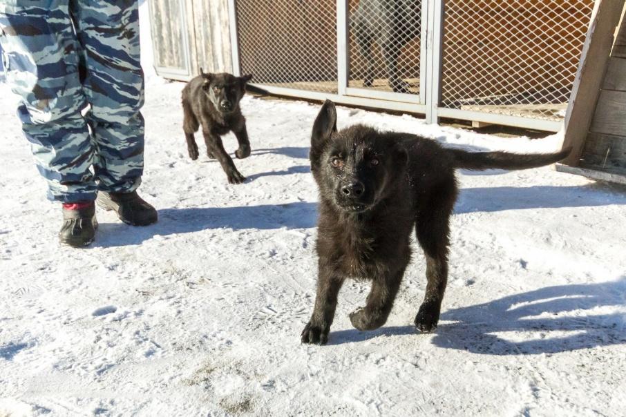 Похитил Грозу: курганцу светит пять лет тюрьмы за кражу щенка