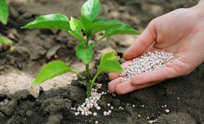Лучшие средства защиты растений, семена и микроудобрения