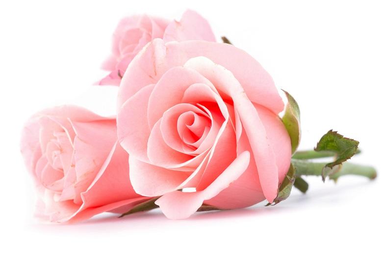 Саженцы разных роз