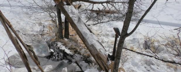 Несколько благородных оленей погибли на Сахалине