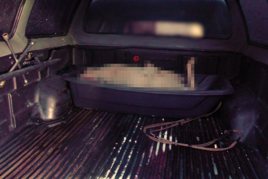 Житель Свердловской области приехал в Зауралье пострелять косуль