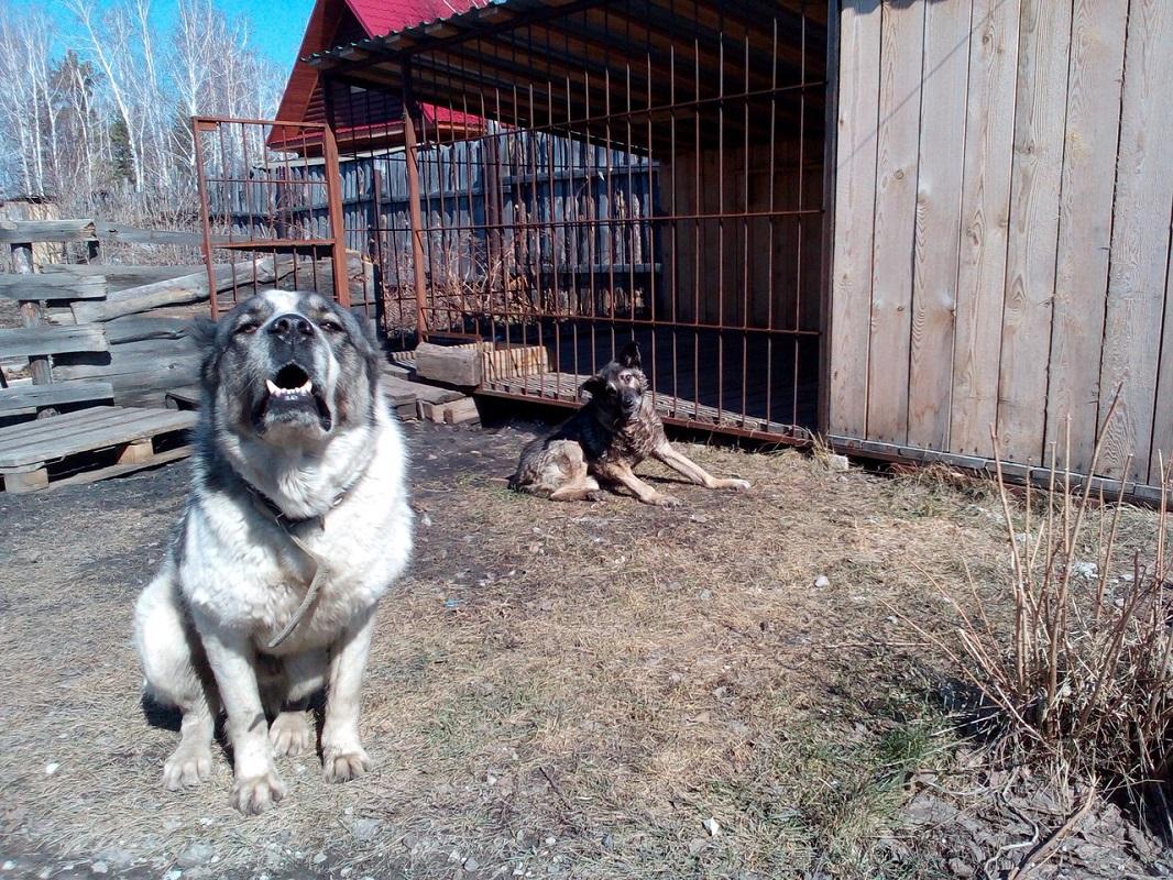 Как стать Дядей Фёдором: в курганском приюте для животных-инвалидов живут 48 кошек и 12 собак
