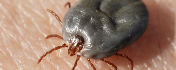 В Нижнекамске от укуса клещей пострадали два человека