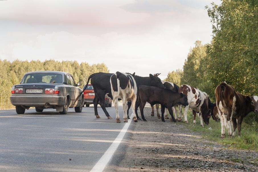 Вместо коров жительница Кургана купила автомобиль на грант для фермеров