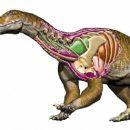 Открыт новый вид динозавра — огромный первый