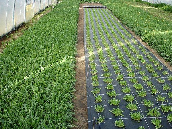 Агросетка, агроволокно и сетки для сада и огорода