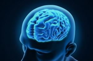 Европейские ученые выяснили, как телосложение связано с размером мозга