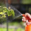 Хотите купить фунгицид для своих растений? Сделать это можно в онлайн-магазине «Защита растений»