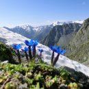 Поход в удивительные Альпы